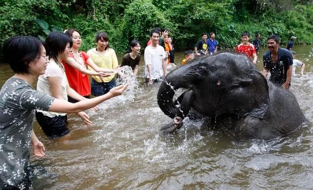 kuala-gandah-elephant-sanctuary_3