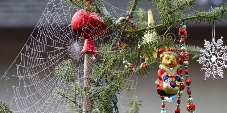 christmas-tree-spider-web.jpg