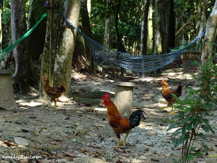 28-Kledang-Saiong-Forest-Eco-Park