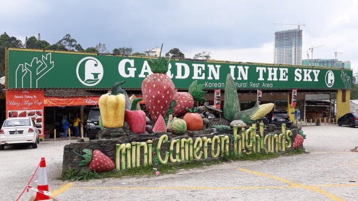 Mini Cameron Highlands Garden 01