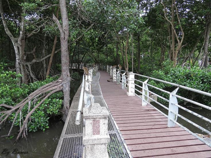 mangrove-swamp-park